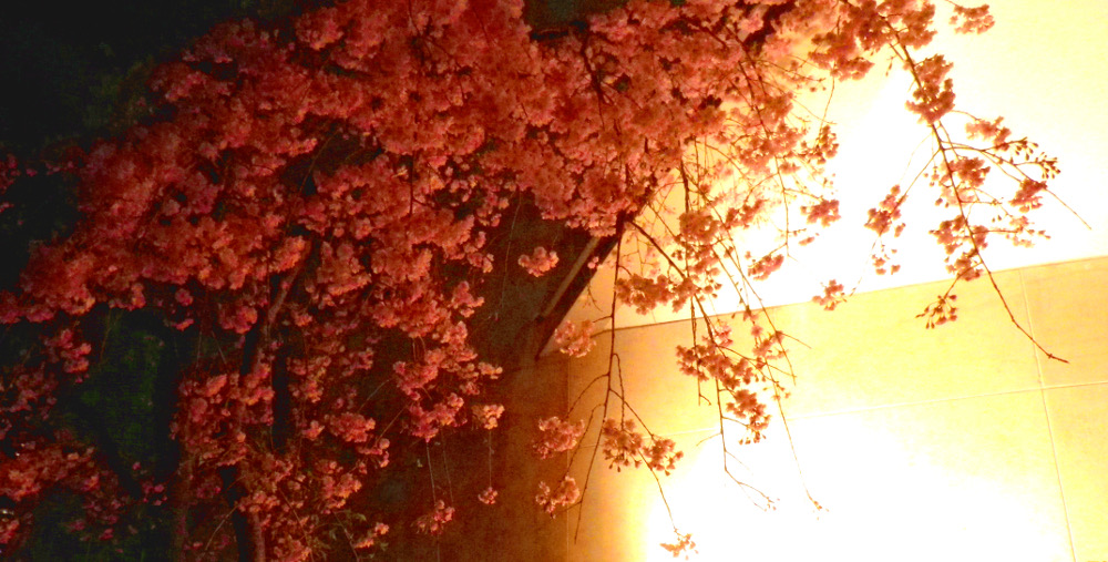 あぷりのお茶会 赤坂・麻布・六本木